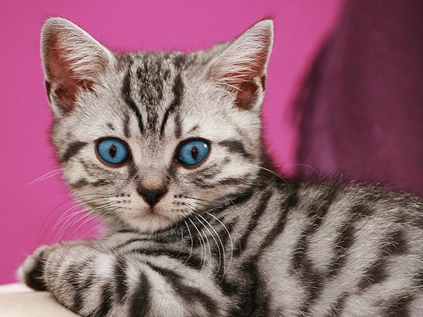 Cat In S S